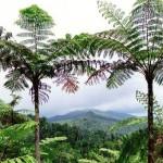 palmen-in-brasilien